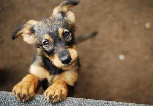 How To Clip a Dog's Toenails
